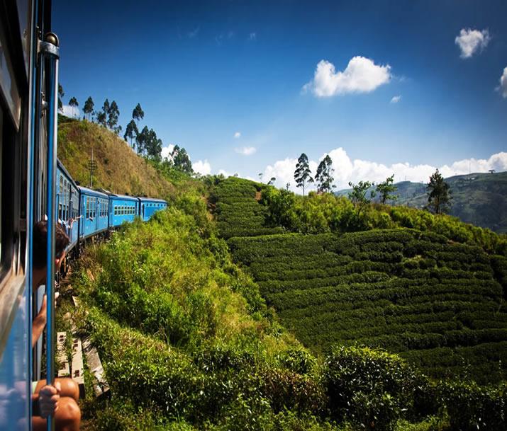 Train Nuwara Eliya